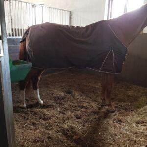 ściółka dla koni
